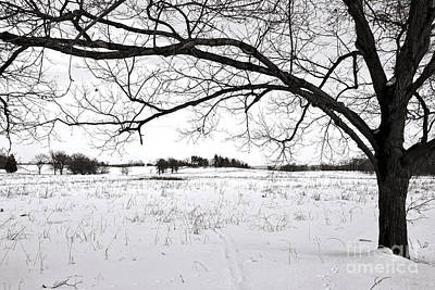 Photograph - Winter At Valley Forge by Olivier Le Queinec