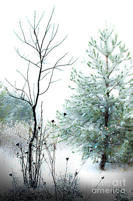 Photograph - Winter Beauty by Michael Arend