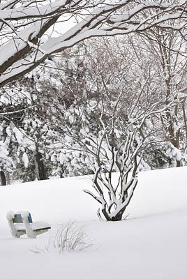 Photograph - Winter Bench by Frederico Borges