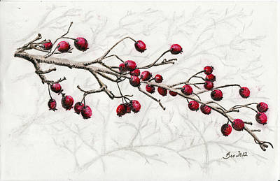 Berry Drawing - Winter Berries by Beverly Farrington