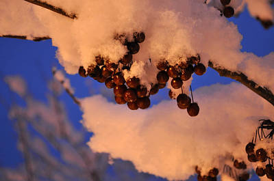 Photograph - Winter Berries by Jim Brage