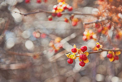 Photograph - Winter Berries by Kelley Nelson