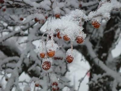 Winter Berries Print by Pamela Turner