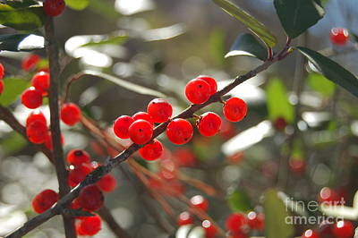 Photograph - Winter Berries by Tamyra Crossley