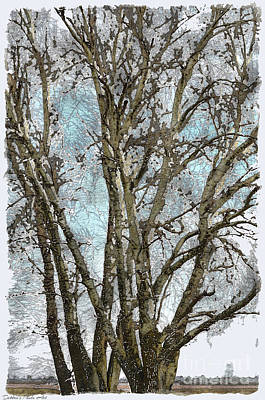 Blank Mixed Media - Winter Birch Trees Photoart by Debbie Portwood