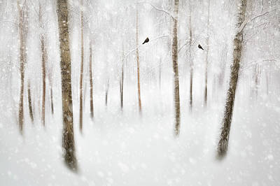 Snow Photograph - Winter Birches by Gustav Davidsson