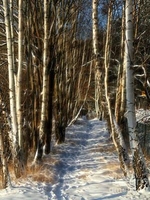 Winter Birches Art Print by Lutz Baar