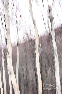 Digital Art - Winter Birches Tryptich 1 by Susan Cole Kelly Impressions