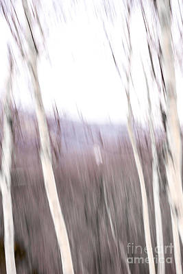 Digital Art - Winter Birches Tryptich 3 by Susan Cole Kelly Impressions