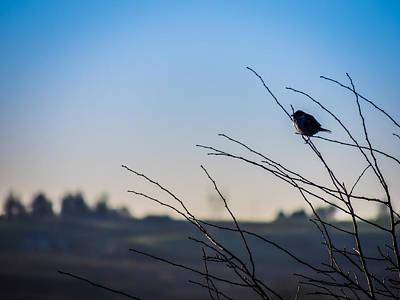 Photograph - Winter Bird In The Irish Countryside by James Truett