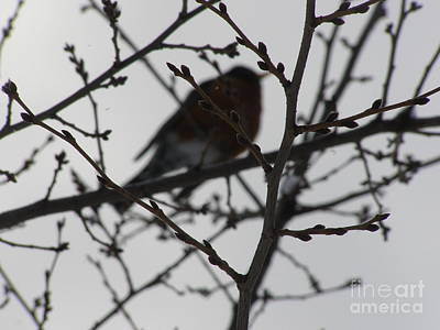 Photograph - Winter Bird by LeLa Becker