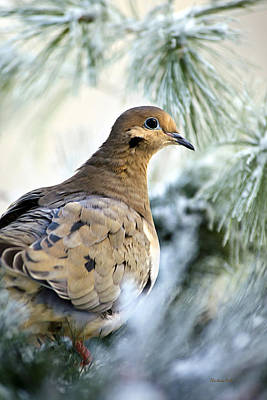 Turtle Mixed Media - Winter Bird Mourning Dove by Christina Rollo