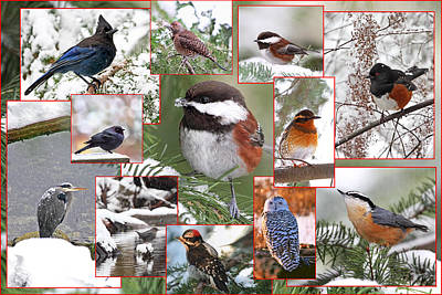 Snowy Trees Photograph - Winter Birds Collage by Peggy Collins