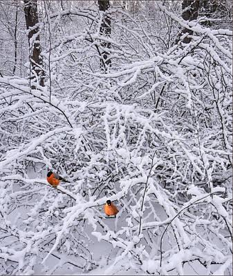 Photograph - Winter Birds by Vladimir Kholostykh