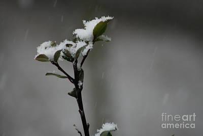 Photograph - Winter Blaknet by Barbara Bardzik