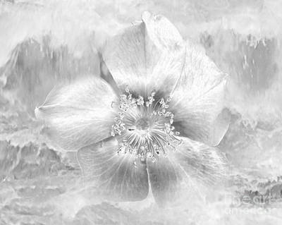 Drawing - Winter Blossom by Tlynn Brentnall