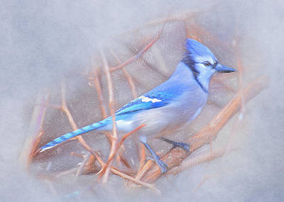 Bluejay Digital Art - Winter Blue Jay by Emily Smith