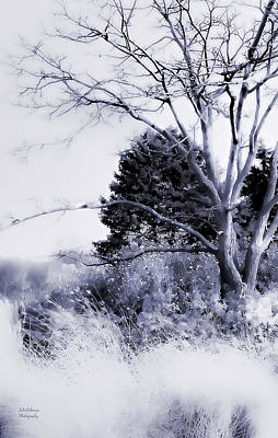 Photograph - Winter Blue  by Julie Palencia