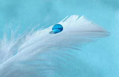 White Feather Photograph - Winter Blues by Krissy Katsimbras