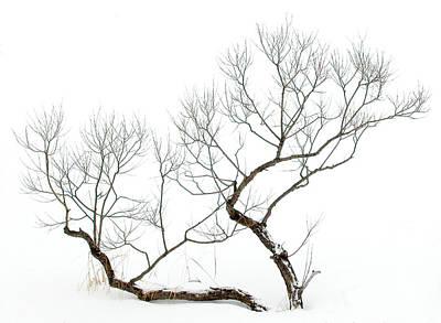 Photograph - Winter Bonsai by Rob Huntley