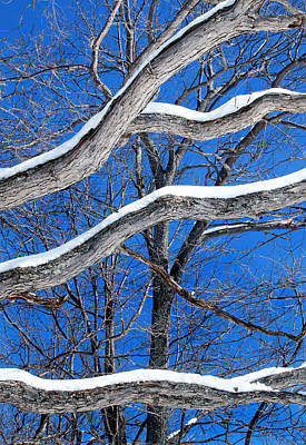 Photograph - Winter Branches by Carolyn Derstine