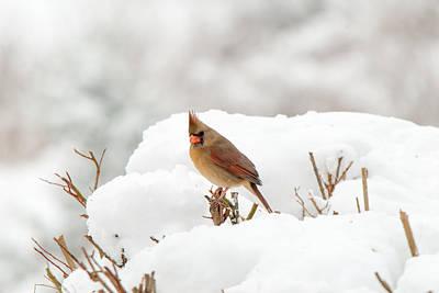 Photograph - Winter Break by Paul Johnson