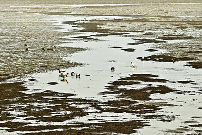 Photograph - Winter Brent Geese - Strangford Lough by Jane McIlroy