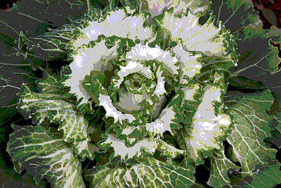 Photograph - Winter Cabbage Series II by Suzanne Gaff