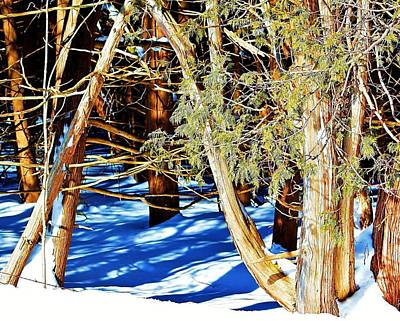 Photograph - Winter Cedars.. by Al Fritz