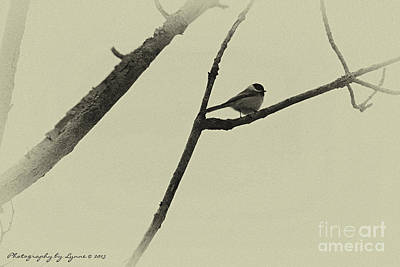 Photograph - Winter Chickadee by Gena Weiser