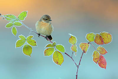 Bird Photograph - Winter Colors by Andres Miguel Dominguez