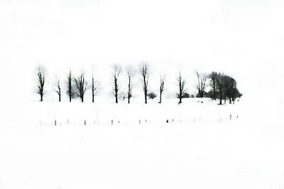 Photograph - Winter Contrast by Andrea Kollo