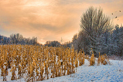 Country Scene Photograph - Winter Corn Field One Tassel Left by Paul Freidlund