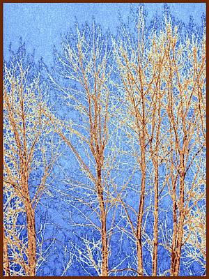 Winter Cottonwoods Abstract Art Print by Will Borden
