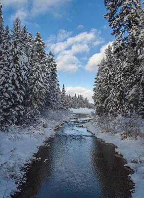 Winter Creek Art Print by Fran Riley