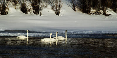 Photograph - Winter Crossing by TL  Mair
