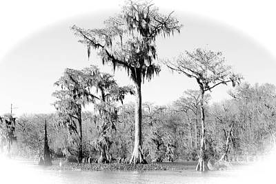 Cypress Swamp Photograph - Winter Cypresses - Black And White by Carol Groenen