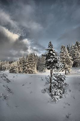 Photograph - Winter by David Andersen