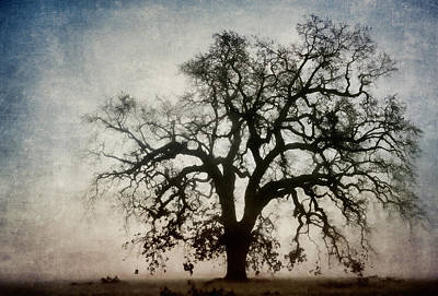 Montage Photograph - Winter Dawn Tree Silhouette by Carol Leigh