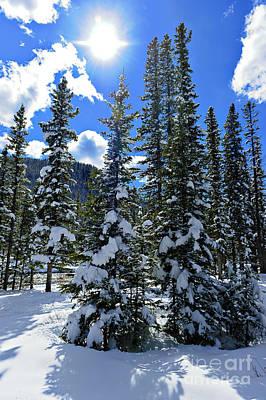Photograph - Winter Day by Edward Kovalsky
