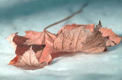 Photograph - Winter Decay 4 by Fraida Gutovich