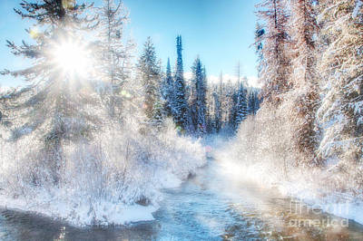 Photograph - Winter Delight On Lolo Creek by Katie LaSalle-Lowery