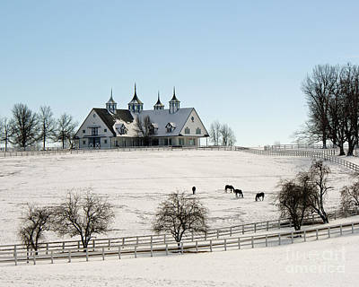 Kentucky Horse Park Photograph - Winter Dream by Roger Potts