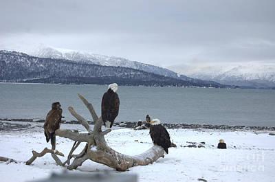 Winter Eagles Art Print