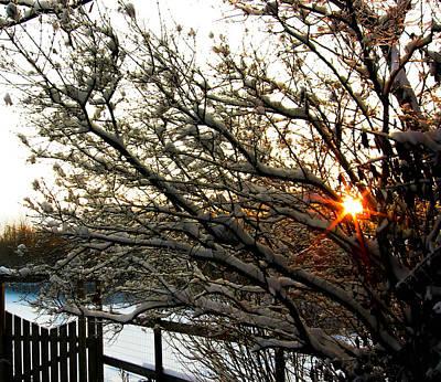 Photograph - Winter Evening Sun by Haren Images- Kriss Haren
