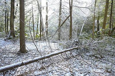 Winter Fallen Tree Art Print by Thomas R Fletcher