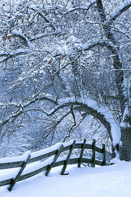 Photograph - Winter Fence by Alan L Graham
