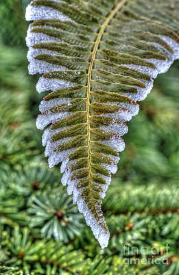 Photograph - Winter Fern by Sarah Schroder