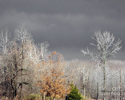 Photograph - Winter Finery Village Creek Ar by Lizi Beard-Ward