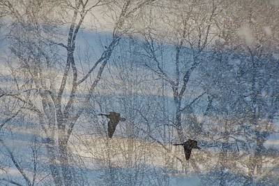 Photograph - Winter Flight by Diane Alexander